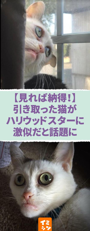 見れば納得 ある女性が引き取った猫がハリウッドスターに激似だと話題に ネットで話題 ハリウッドスター俳優スティーブ ブシェミにそっくりな猫 Pinterest Hash Tags Max 8 猫 ハリウッド 俳優 スティーブ ブシェミ ネット そっくり 猫 動物
