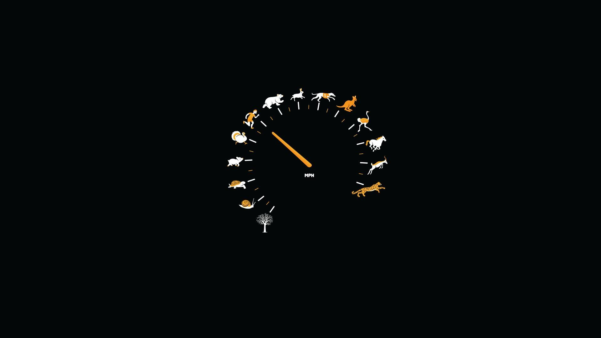 Animals Black Background Funny Gauge Speedometer Wallpaper 1094495 Wallbase Cc Minimalist Wallpaper Funny Wallpaper Minimal Wallpaper