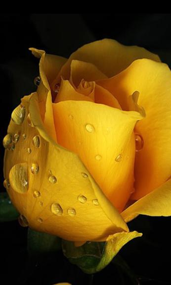 ROSE GARDEN - Comunidade - Google+