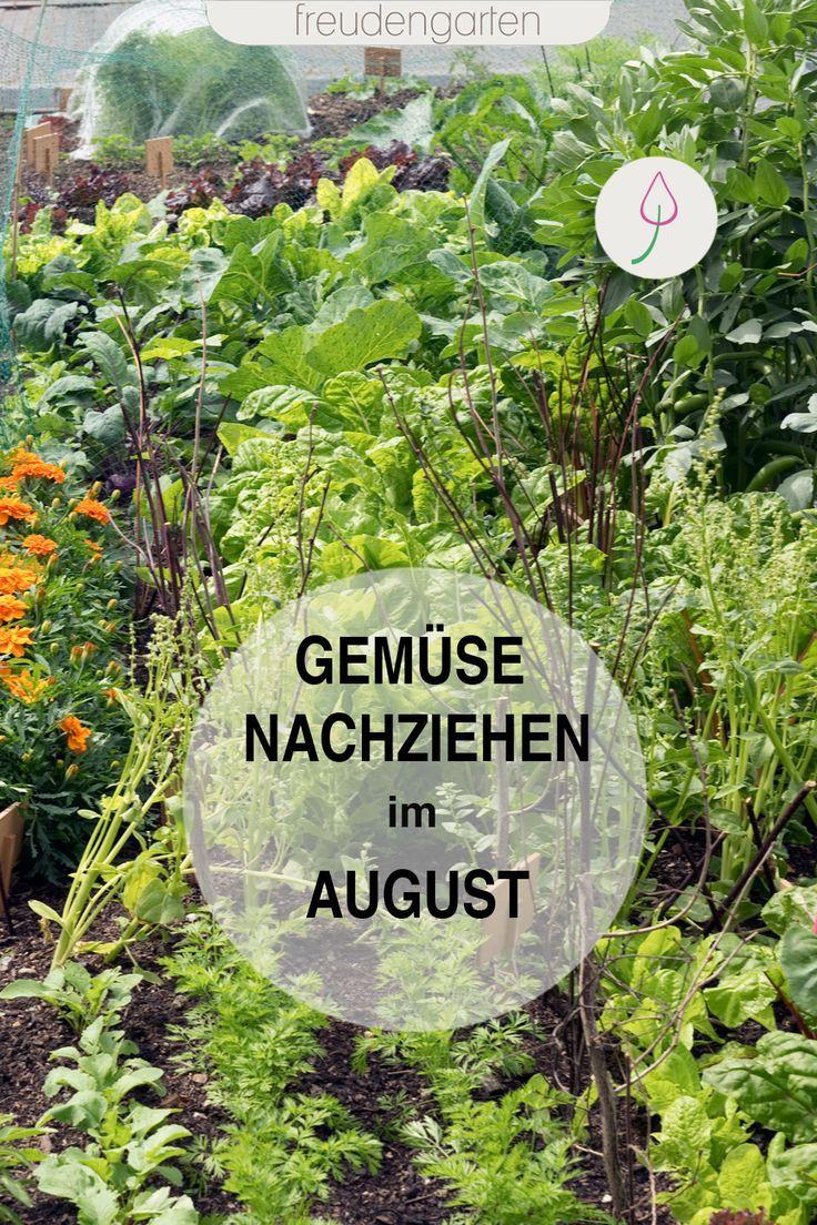 Gemuse Im Sommer Aussaen Garten Bepflanzen Selbstversorger Garten Gemusegarten Anlegen
