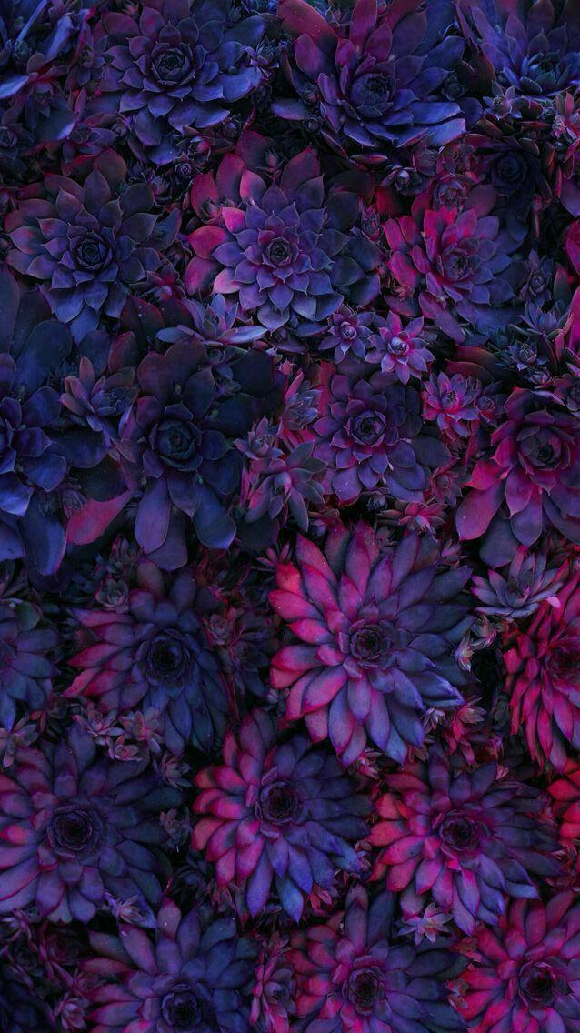 Фон, заставка, обои, wall , flowers, цветы | Фотографии ...