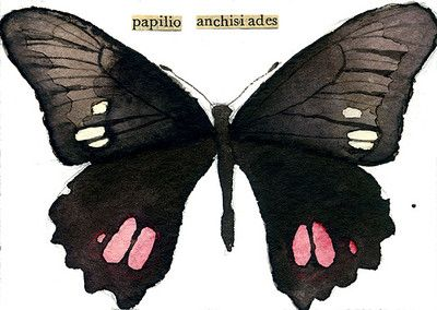 """watercolor, aceo, art card, """"Anchisiades Swallowtail"""""""