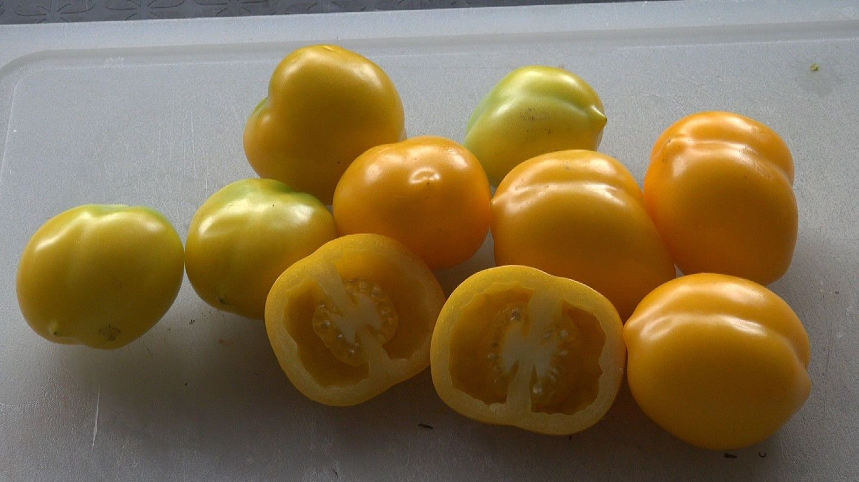 Plum Lemon TomatoSolanum lycopersicum10 seeds HRSeeds.com