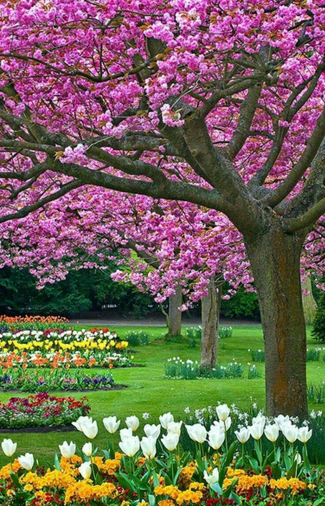 Beleza da natureza flowers and flower gardens in 2018 pinterest beleza da natureza spring landscape garden park gardens of the world dream garden izmirmasajfo