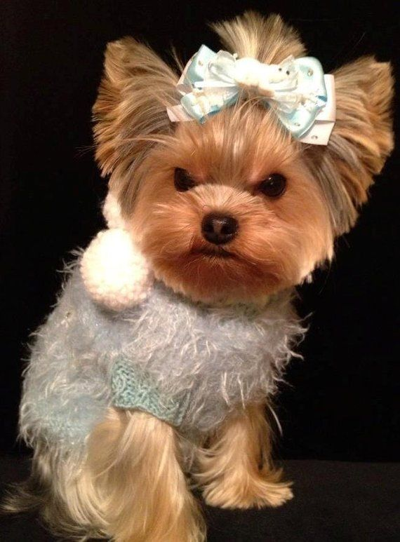 ICE PRINCESS Original Fluffy Dog Sweater Custom Hand