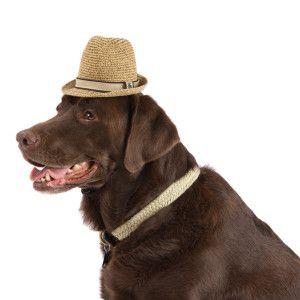 Tommy Bahama Straw Hat Sale Dog Petsmart Relaxed Style Style Tommy Bahama