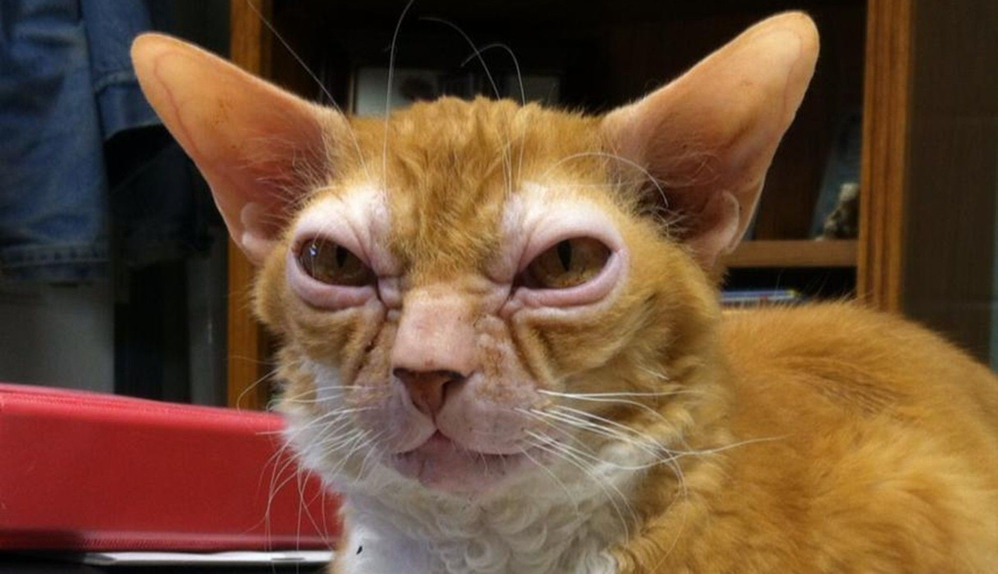 This Cat Weirdly Looks Like Yoda From 'Star Wars' Crazy