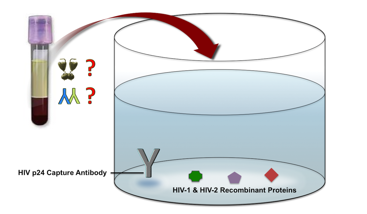 The Fourth Generation Hiv Antigen Antibody Assays Contain Components