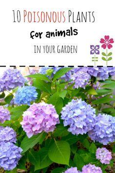 Gardening Safety For Pets Animal Emergency Referral Center Of Minnesota Plants Dog Safe Plants Plant Guide
