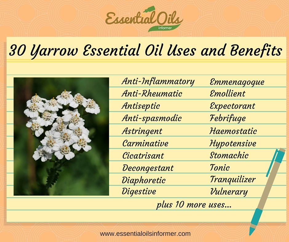 30 Amazing Yarrow Essential Oil Uses And Benefits That Will Blow You Away Yarrow Essential Oil Essential Oil Uses Oil Uses