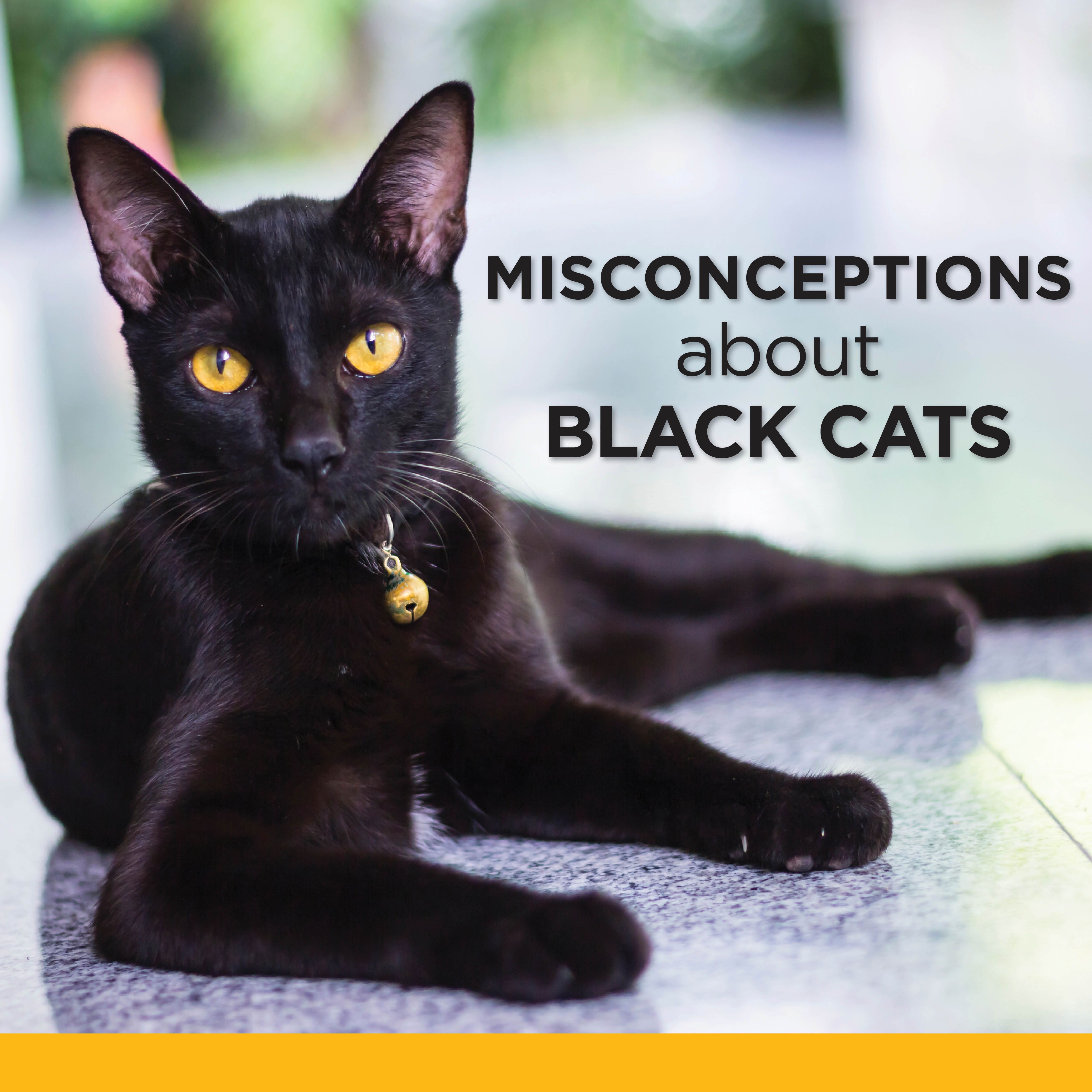 Today Is National Black Cat Appreciation Day Why Do Black Cats Historically Get Such A Bad Rap Are You Familiar Wit Black Cat Appreciation Day Cats Black Cat