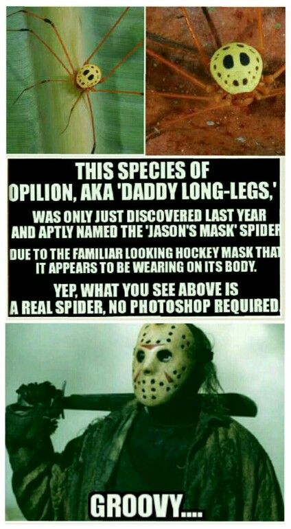 Dark Humor Horror Movies Funny Funny Horror Horror Movies Memes