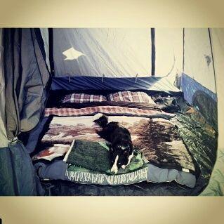 @napieroutdoors  #campingwithourfurryfriend#alaskadreaming