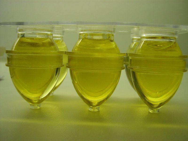 candida albicans huile essentielle