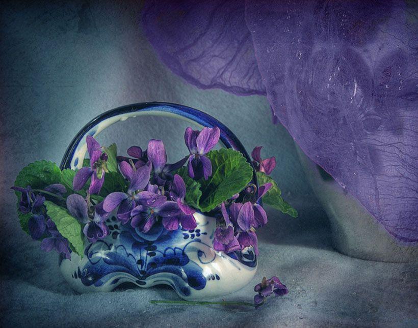 Violets - lovely color