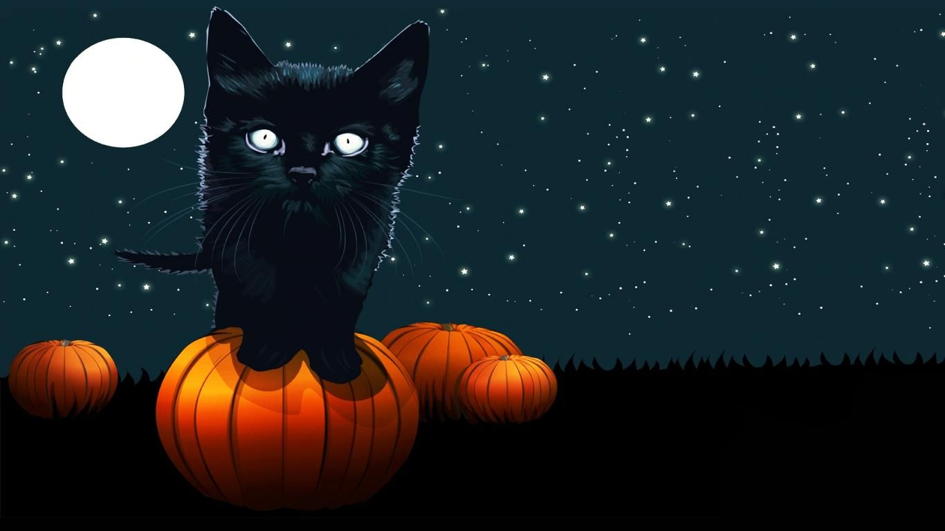 halloween cat pics | Free Download HD Halloween Black Cat ...