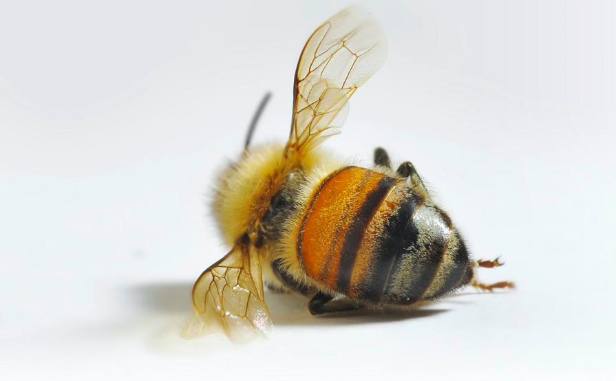 Die nächste Bedrohung für die Bienen… | Der Honigmann sagt...