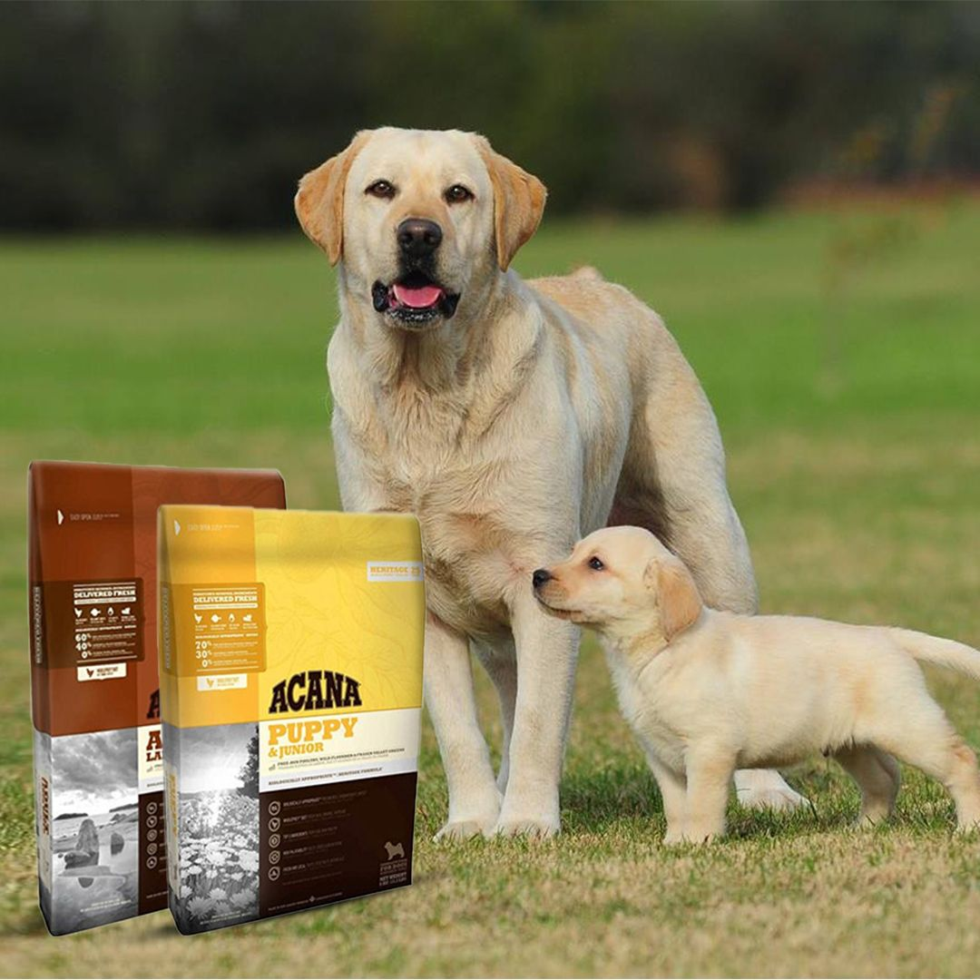 Acana Premium Dog Food Delivers With 78 Of Frozen And Dehydrated