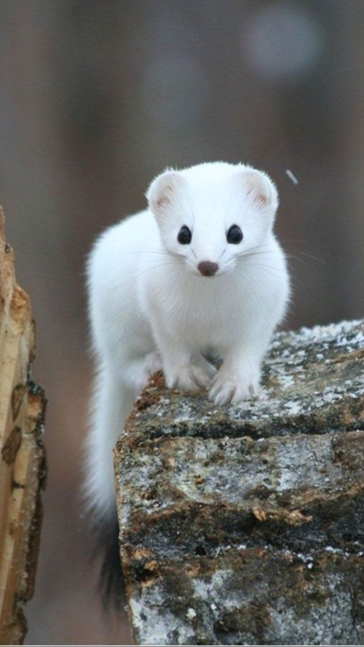 Source :beautiful wildlife nature #albinoanimals