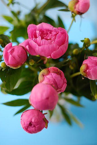 flowers_6178.jpg