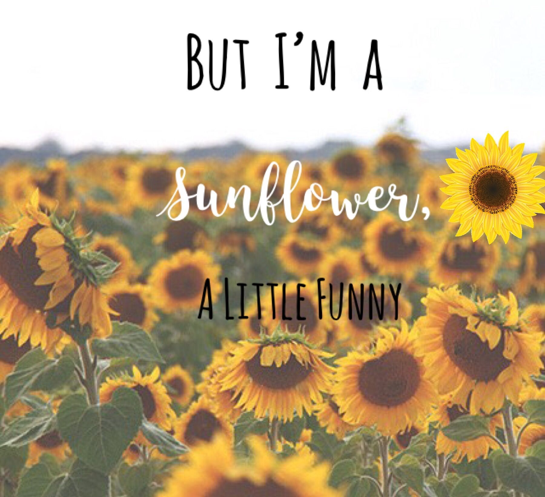 Sierra Burgess Is A Loser Shannon Purser Sunflower Lyrics