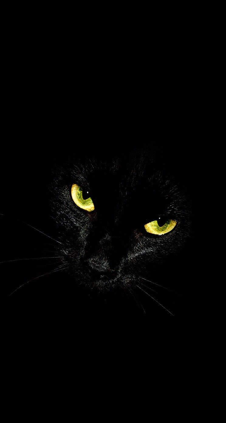 Black Cat Glowing Eyes Iphone Wallpaper Background Animais