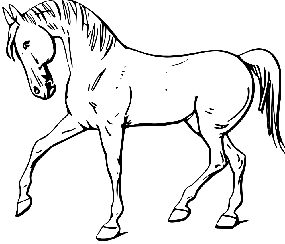 Outline Drawing of Domestic Animals Yahoo Image Search