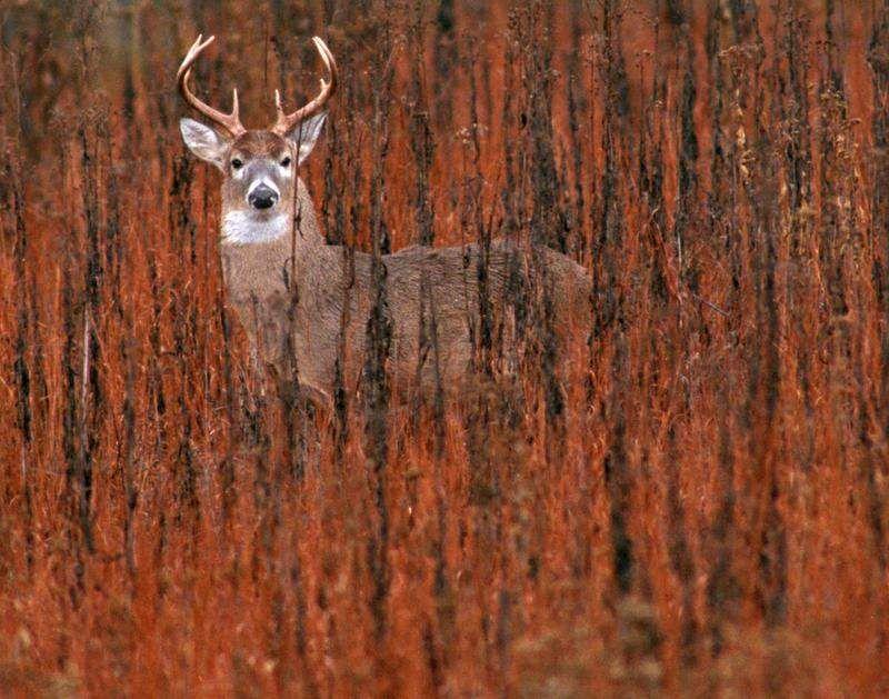 Outdoors: True spirit of deer hunting involves fair, honest pursuit