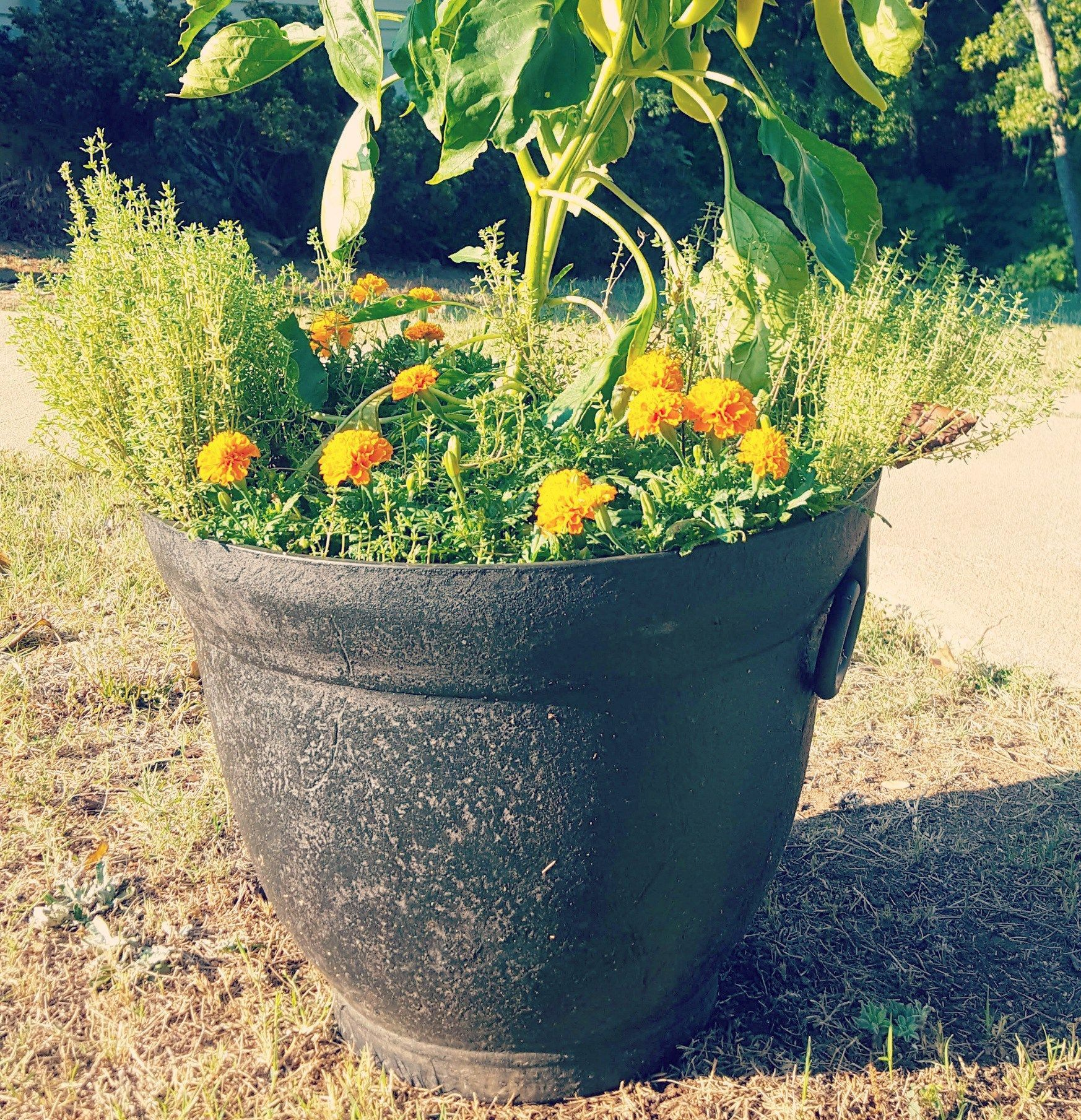 Container Ve able Gardening For Beginners
