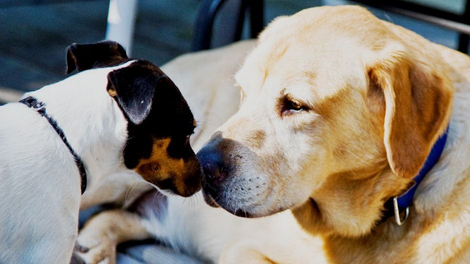 Introducing A New Dog To Other Pets Rent Blog Introducing A New Dog Dogs Pets