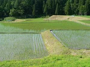 美しき水と緑の風景その1 | 秋田のグリーン・ツーリズム総合情報サイト 美の国秋田・桃源郷をゆく