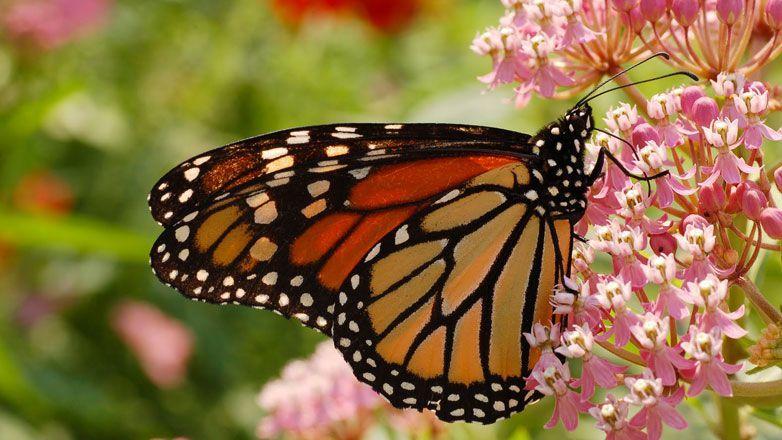 Uno splendido esemplare di farfalla in un giardino