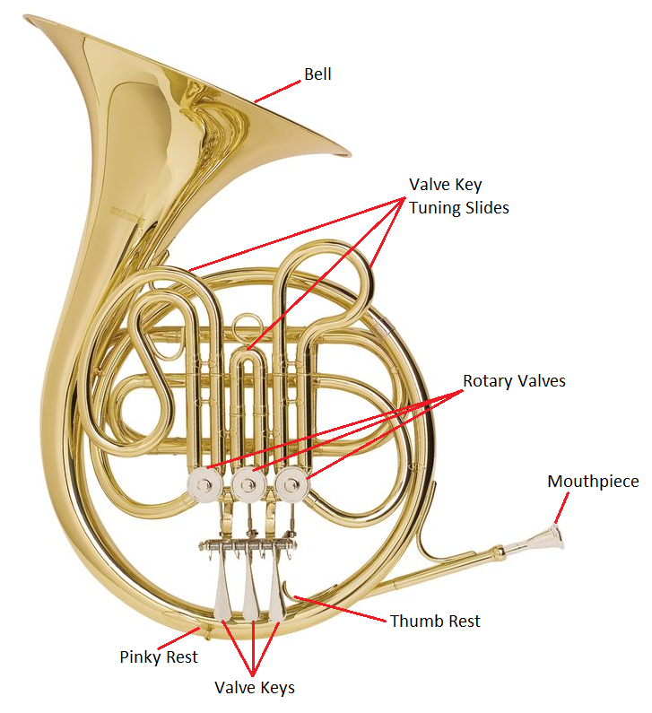 French Horn Anatomy I Loved Playing It And I Still Love The Sound French Horn Horns Anatomy