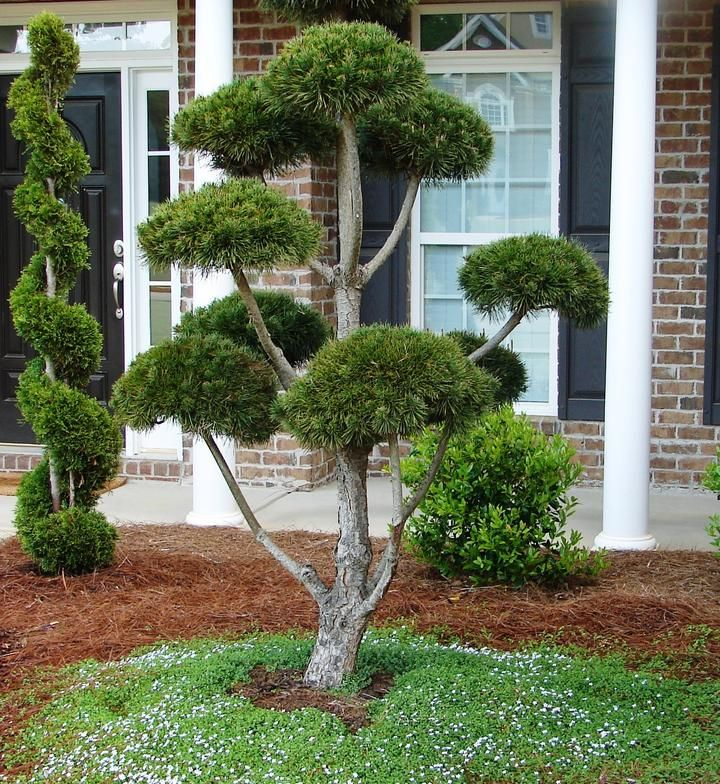 photo gallery of allin landscaping servicing homeowners in