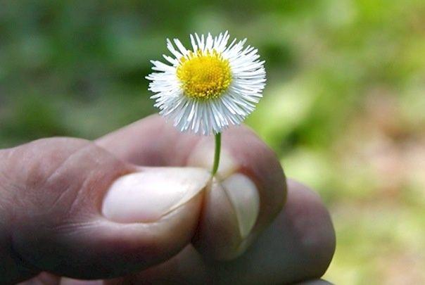 A mão que dá uma flor