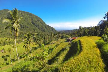 Bali Day Tour of Sunrise Watch at Kintamani, Lemukih Rice Field and Sekumpul Waterfalls - Bali   Viator
