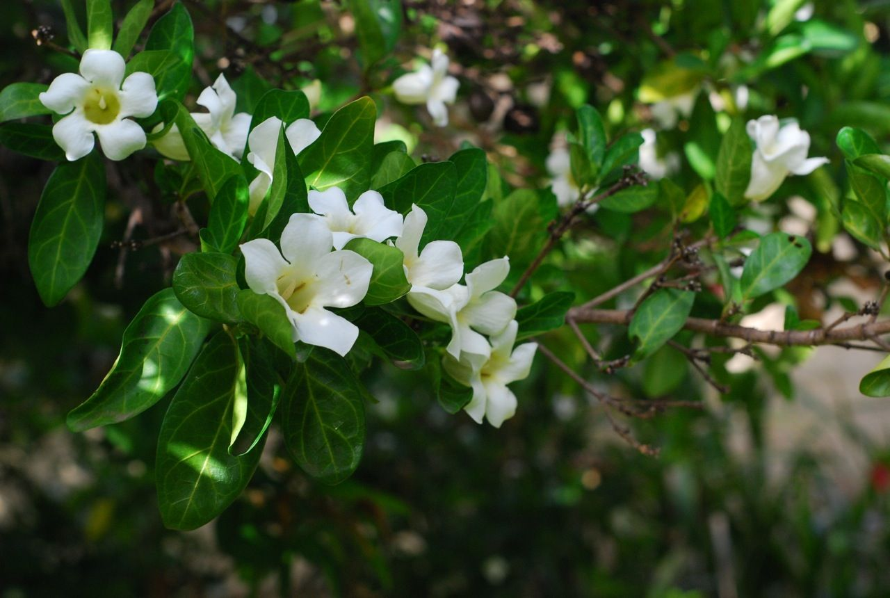 White flower bushes pics yahoo search results gardens white flower bushes pics yahoo search results mightylinksfo
