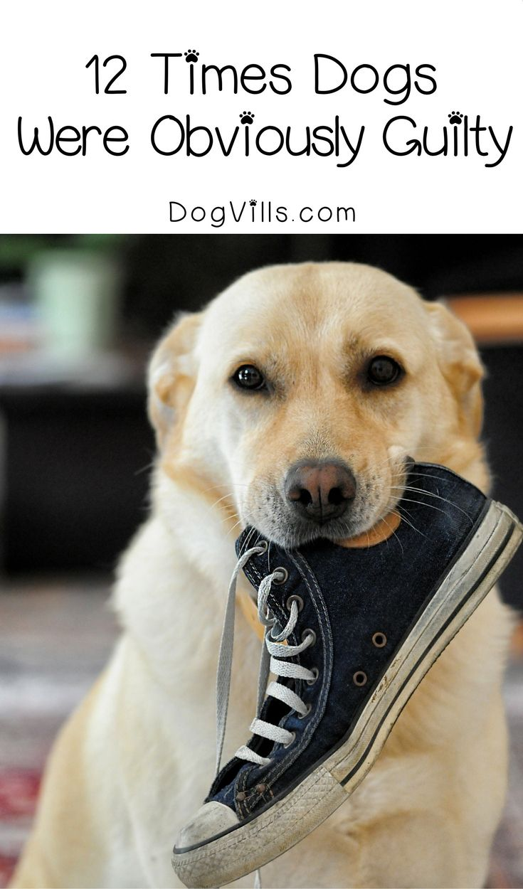 12 Times Dogs Were Obviously Guilty Dog training, Best