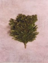 silver fir bough holiday greenery - Christmas Greenery Wholesale