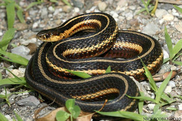 Mi Reptiles Clare County Snake Reptiles