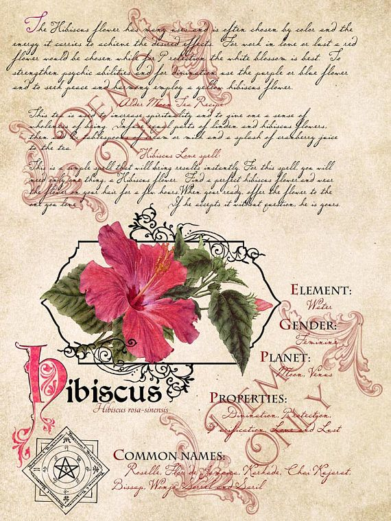 The Cackling Cauldron BOS 4 page set #15 | flors | Pinterest | Las ...