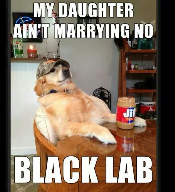 My Daughter Aint Dating No Black Lab Meme