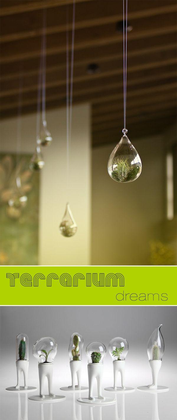 Home terrarium dreams terrium pinterest terraria and plants