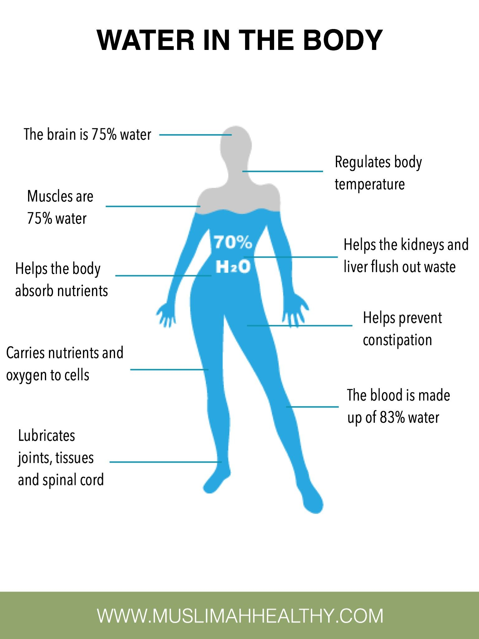 what part does water play in regulating your body temperature
