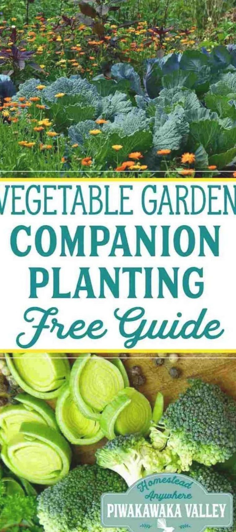 c130a3939d141884588f88b49e14961d - The Vegetable Gardener's Container Bible Pdf