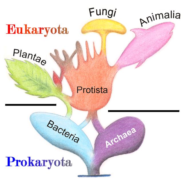 Eukarya Definition