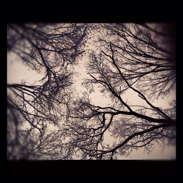 Looking up into branches on a snowy morning; my own photo. (c) Renée LaScala, 2012