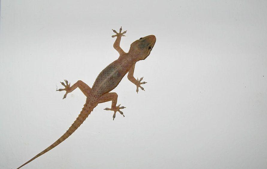 معنى تفسير الوزغ في المنام للحامل والمتزوجة والعزباء موسوعة Reptiles And Amphibians Gecko Lizard