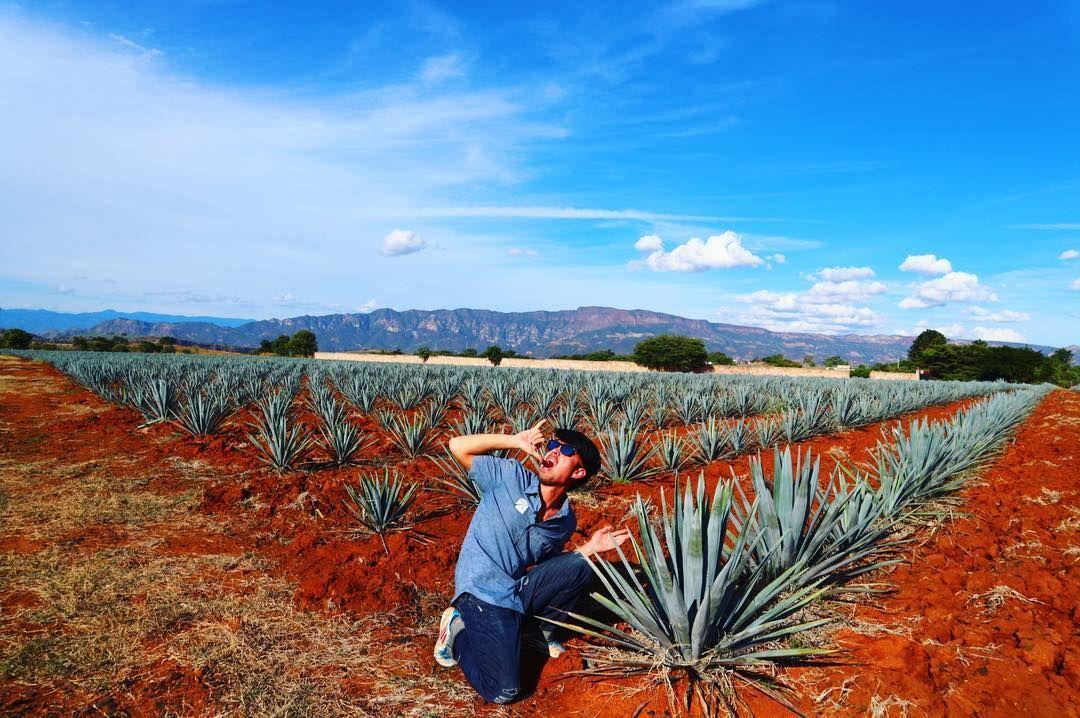 Yay in Tequila!!!!!@yuki.latino #mexico #tequila #alcohol  #travel #travelblogger #blogger #beautiful #love #culture #adventure #travellikedance #gopro  #sponsorship #nature #メキシコ#テキーラ #sns