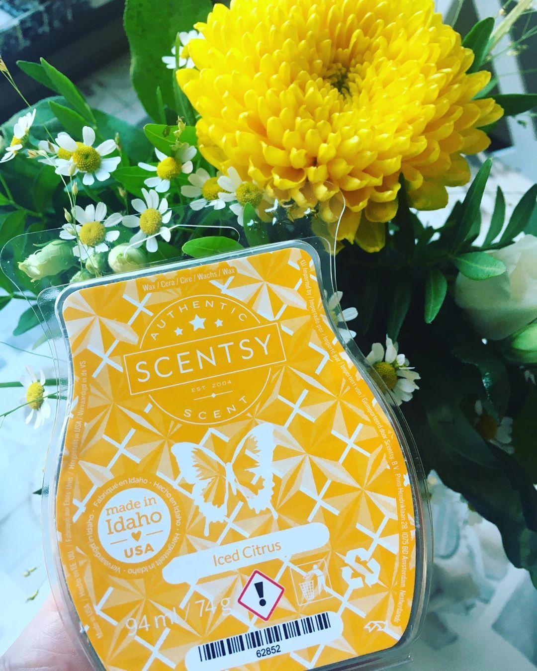 """Unabhängige Scentsy Beraterin on Instagram: """"🍋Iced Citrus🍋 Eisgekühlte Zitrone und frische Ananas erregen mit einer Garnitur aus zerkleinerter Minze Aufsehen. Heute Morgen musste ich…"""""""